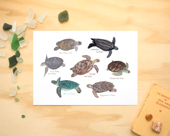 Sea Turtles A4 or A3 Print // Painting Art Print of Sea Turtles // Sea Creature Painting // Turtle Painting Print