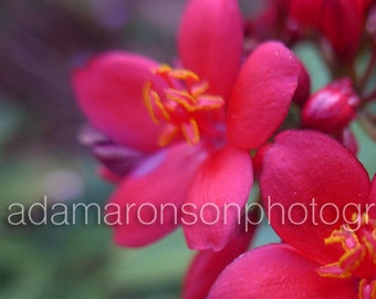 Photograph of a Red Flower