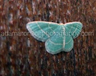 Photograph of a blue moth