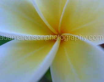 Photograph of a Unknown Yellow Flower Detail