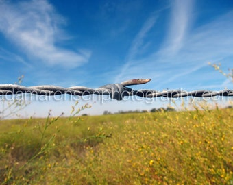 Photograph of barbed wire landscape