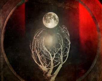 Trees - Landscape art, Destroyed Film, Moon, Red, Nature, Tiny Planet, Distressed, Branches, Presque Isle, Erie PA Photo