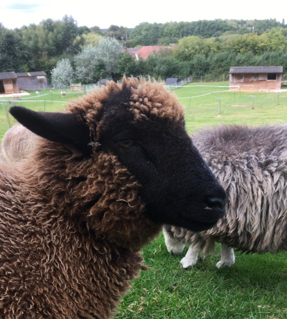 TICKET to Hooligan Yarns Sheepy Sunday events 10th/24th November 2019