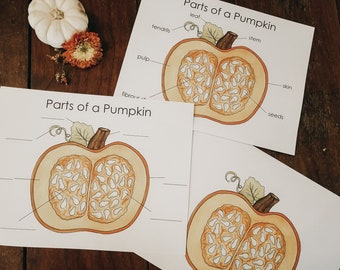 Parts of a Pumpkin Poster and Worksheet