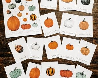 Pumpkin Varieties Mini Lesson