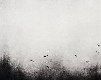 Birds Black and White Flight Photograph
