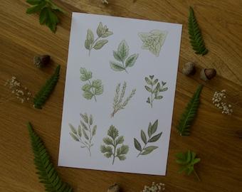 Herbs - Art Print