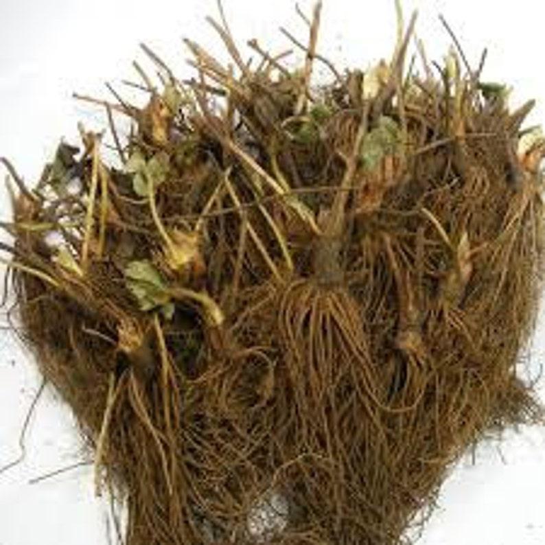 25-Strawberry Plant-Ozark-Organic-Non Gmo--BUY 4 GET 1 FREE
