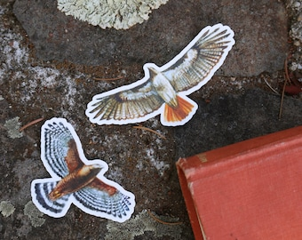 Raptor Stickers: Two Vinyl Stickers, Red Tailed Hawk, Red Shouldered Hawk, Birds Of Prey Stickers