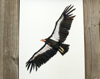 California Condor 8x10 Print - Native California Wildlife, Bird Print, Raptor, Birder gift, Birding, Birds of prey, Watercolor print