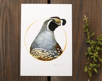 California Quail 5x7 Print - Native California Wildlife, Bird Print, Birding gift, Callipepla californica