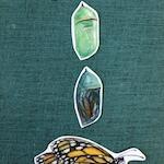 Custom Monarch Metamorphosis Print