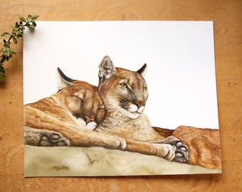 Mountain Lion 8x10 Print - Native California Wildlife, Animal Print, Cougar, Puma, Watercolor Artwork