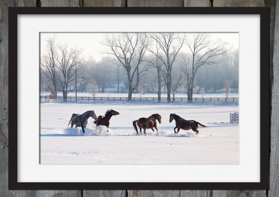 Horses Playing in Snow Lexington Bluegrass Kentucky | Etsy