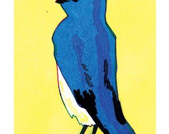 State Birds - Mountain Bluebird