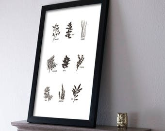 Herbs Poster 11x17