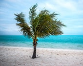 Palm tree picture stretched canvas wall art on Turks and Caicos. White sand beach seascape original photography, Tropical ocean framed print
