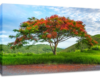 Living room art tree photograph. Flamboyant Royal Poinciana. Landscape picture tropical print. Nature colorful art for bedroom peaceful calm