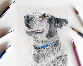 Custom Pet Portrait- Original Colored Pencil Drawing