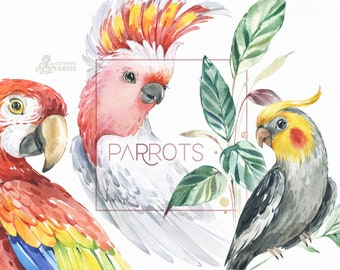 Parrots. Watercolor birds clipart, tropical, leaves, floral, Cockatiel, Cockatoo, Macaw, nursery art, nature, realistic, jungle, ara