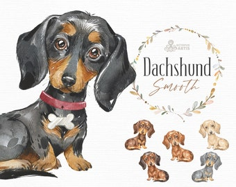 Dachshund Smooth. Watercolor little animal clipart, portrait, puppy, doggie, baby, flowers, kids nursery, sausage dog, badger dog, wreath