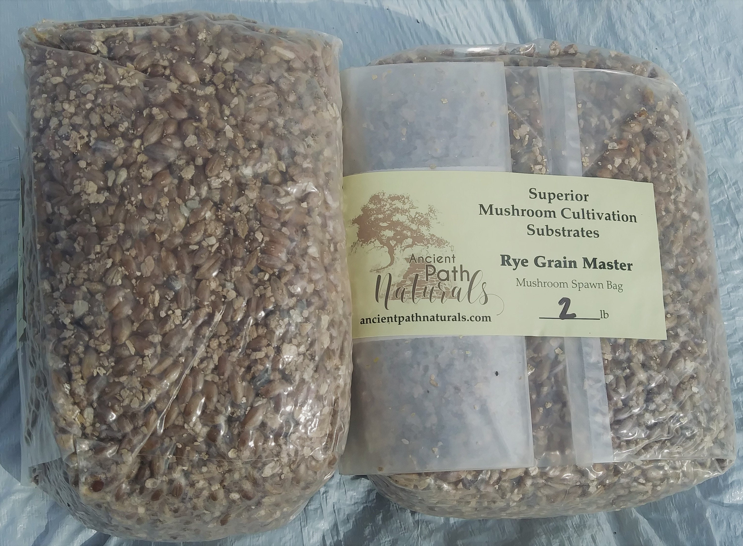 Sterilized Rye Berry Mushroom Substrate 6 One Pound Bags