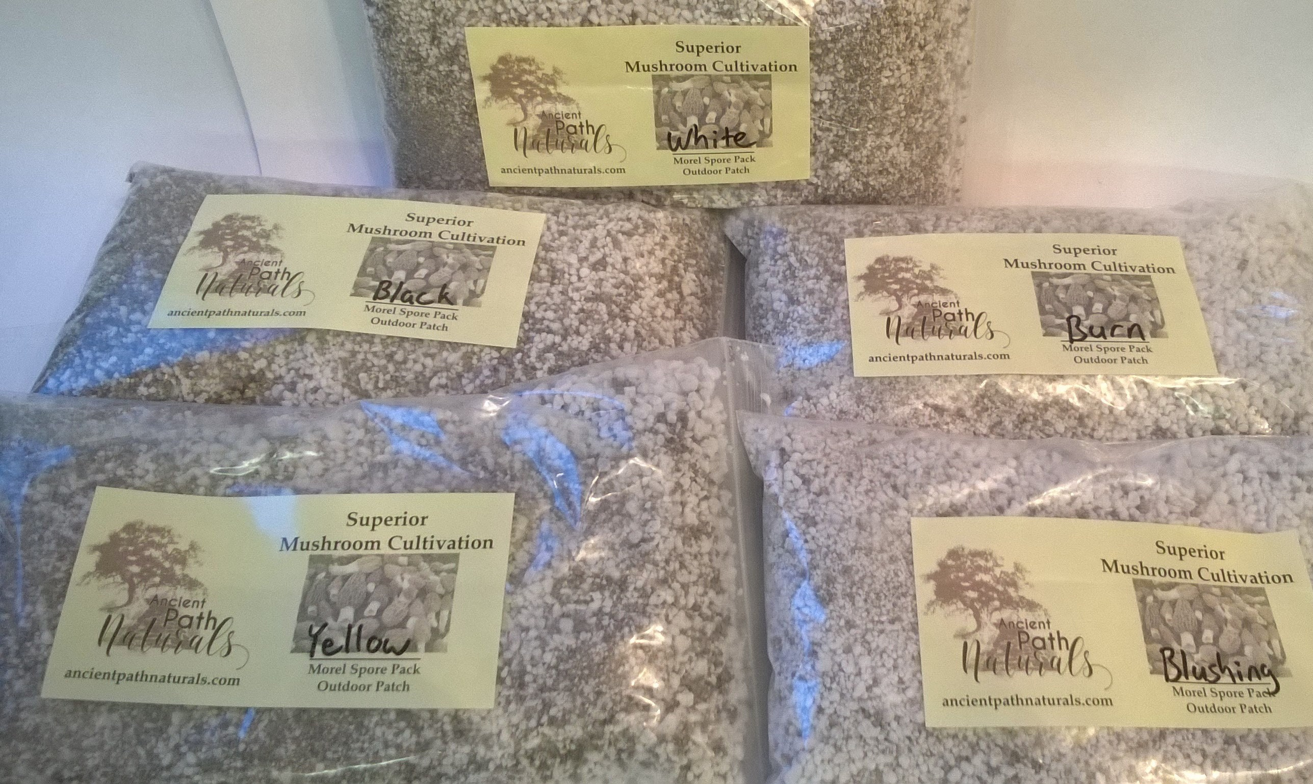 Yummy gourmet Yellow Morel Mushroom Spores Dried Sawdust grow Bag Spore  Kit