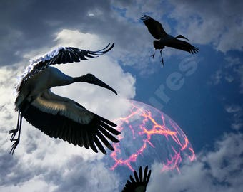 Woodstork leaving Earth. Dramatic, otherworldly.