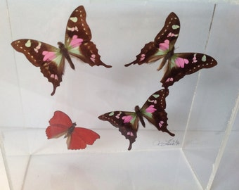 Vintage Framed Real Butterflies/Butterfly Wall Hanging/nature wall decor,Lucite Wall Decor,insect wall decor/bedroom wall decor, Unique Gift