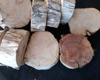 Tree Branch Slices Discs Chunky Cypress 12 Pieces for Natural Craft Projects Decor Fairy Garden or Esential Oil Infusion