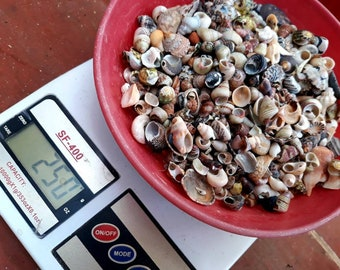 Shells Tiny Seashells Assorted 250 Grams