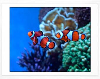 Fish from Finding Nemo, Clownfish Photo, Kids Room, Childrens Bathroom, Nursery Decor, Beach Decor, Ocean Photo Art, Large Wall Art