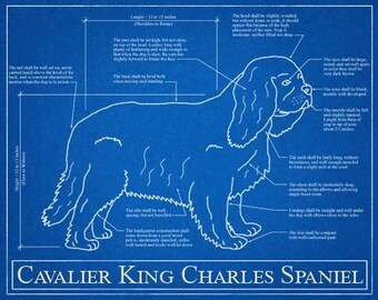 Personalized dog blueprints custom pet by wetnosewigglybutts cavalier king charles spaniel blueprint elevation cavalier king charles art cavalier king charles wall art cavalier king charles gift malvernweather Image collections