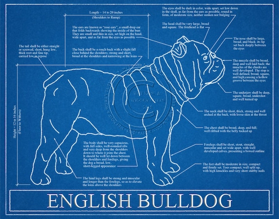 English bulldog blueprint elevation english bulldog art malvernweather