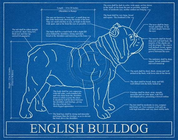 English bulldog blueprint elevation english bulldog art malvernweather Image collections