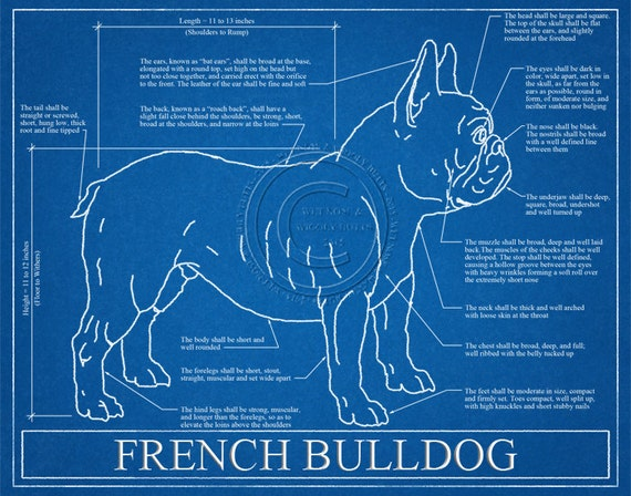 French bulldog blueprint elevation french bulldog art etsy image 0 malvernweather Image collections
