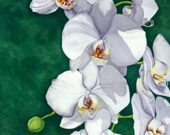 Watercolor painting...ELEGANCE...orchids...giclee