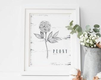 Peony Drawing, Peonies Print, Botanical Wall Art, Farm House Art, Fixer Upper Style, Rustic Decor, Kitchen Wall Art, Flower Art Poster Large