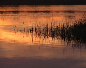 Photography, Nature Prints, Art and Collectibles, Fine Art Photos on Metal