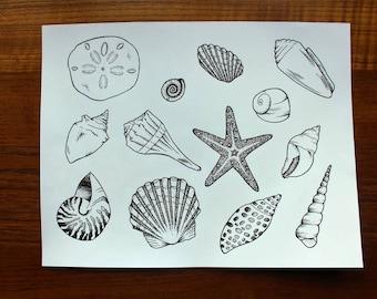 Seashell Collection Print