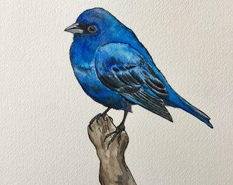 Indigo Bunting, Watercolor **original**