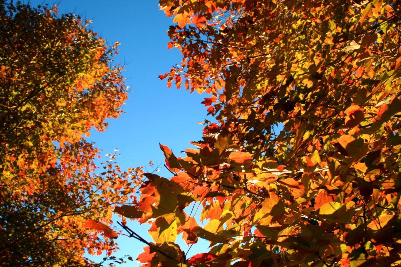 Yesvember State Botanical Garden of Georgia Athens Georgia | Etsy