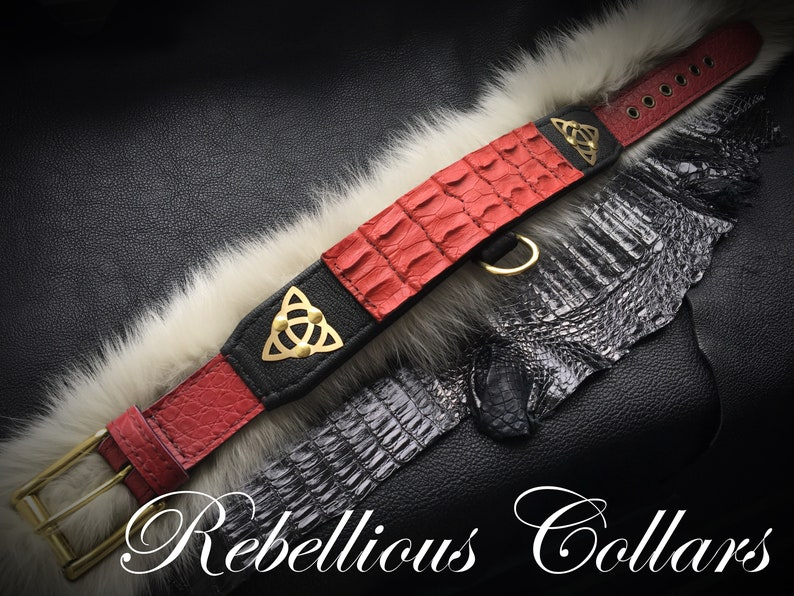 Celtic dog collar with croco leather 2 inch wide