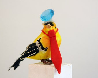 Costumes For Your Pet Bird