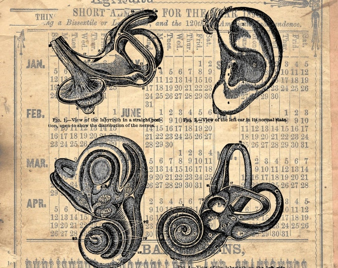 EAR Study vintage medical image doctor Otolaryngologist teacher gift art print custom choice background from antique paper ES1001