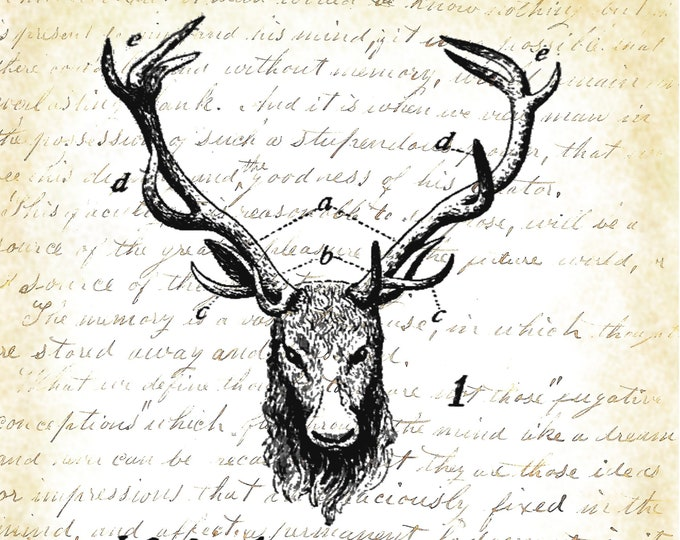 Royal Stag from 1895 dictionary print RS293