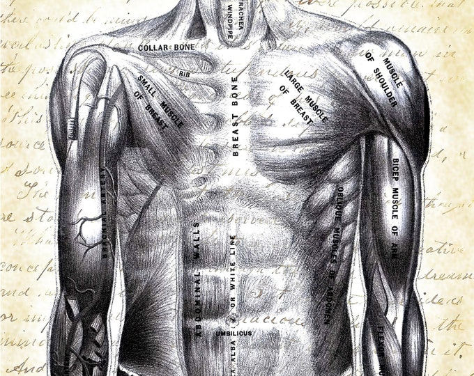 human torso anatomy doctor gift  based on vintage science art print DR4767