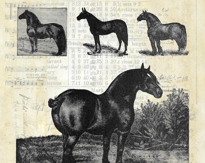 Farmhouse horses vintage art print poster FH2298