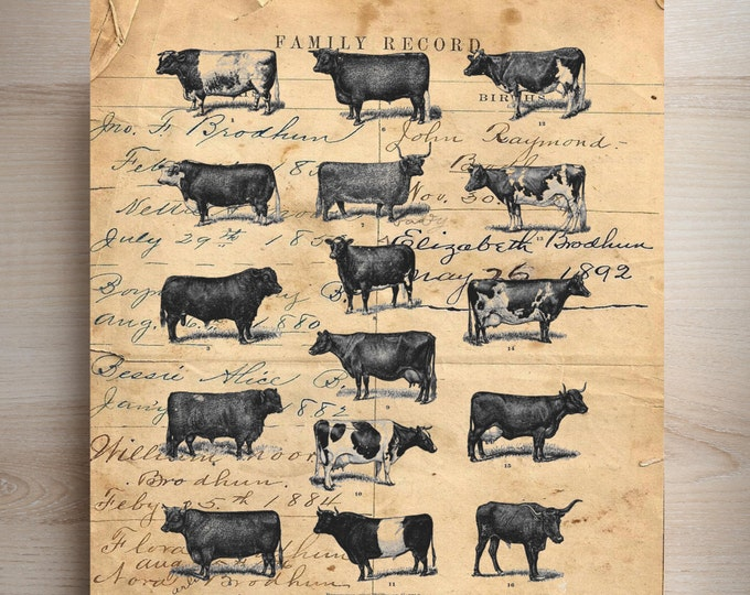 Cow FARMHOUSE bovine decor vintage rustic farm art print custom choice background from antique paper CSV3567