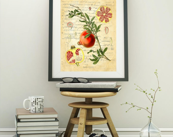 Botanical Print Pomegranate fruit farmhouse decor choice of background antique ledger, journal, almanac, vintage collage wall decor BPF2030